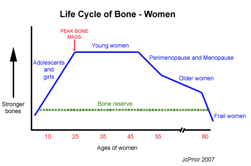 Life cycle of bone for women